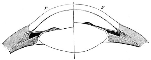 PSM V45 D217 Section of the lens showing the mechanism of accommodation.jpg