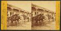 Pack burros in Santa Fe, by Brown, William Henry, 1928-.png