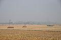 Paddy Field after Harvest - Birahi - Nadia 2014-11-28 9913.JPG