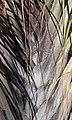Palm 2 (5494703603).jpg