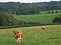 Pastures near Lane End - geograph.org.uk - 977104.jpg