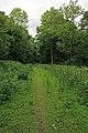 Path in Blackmoor Copse - geograph.org.uk - 452266.jpg