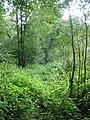 Path inside Aldercar Wood close to New Hall - geograph.org.uk - 544075.jpg