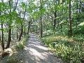 Path through Hawksworth Wood (geograph 5837947).jpg