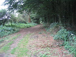 Peddars Way near Thompson.JPG
