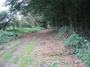 Peddars Way - Peddars Way near Thompson