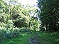 Permissive bridleway in Fontmell Wood - geograph.org.uk - 516367.jpg