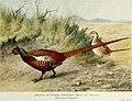 Pheasants in covert and aviary (1912) (14750192126).jpg