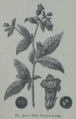 Picture Natural History - No 362 - The Nightshade.png