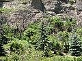 Pied de la falaise - chemin sous le Roc (Embrun).jpg