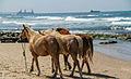 PikiWiki Israel 31347 Cities in Israel.jpg
