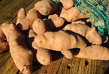 Pink fir-apple potato.JPG