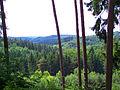 Pirmannswald bei Lautzkirchen 01 2010-06-18.JPG