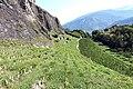 Plantation in Sion.jpg