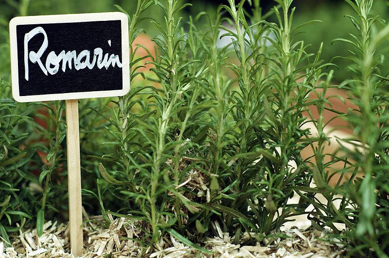 File plantes aromatiques cl j weber03 23049119364 jpg for Plantes aromatiques