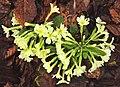 Plitvice. Flora 02.jpg
