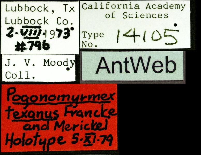 File:Pogonomyrmex texanus castype14105 label 1.jpg