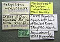 Polyergus nigerrimus casent0173338 label 1.jpg
