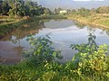 Pond20141214 162723.jpg