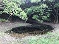 Pond in Kasuya Research Forest of Kyushu University.jpg