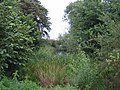 Pond near Upper South Farm 2 - geograph.org.uk - 1246782.jpg