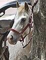 Pony of America.jpg