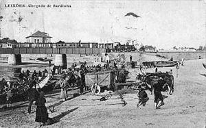 Matosinhos - A turn-of-the-century perspective in Matosinhos: part of the annual sardine fishing season