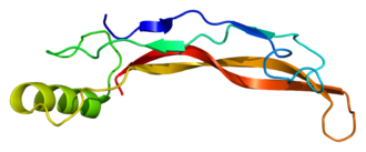 Neural plate -  3-D structural model of BMP-4