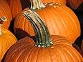 Pumpkin stem.jpg