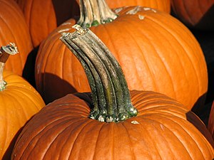 A pumpkin stem