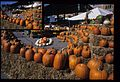 Pumpkins, City Market (Missouri State Archives) (8203213427).jpg