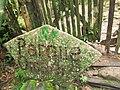 Puyo paseo turístico 5 ene 2015 050 (16193623476).jpg