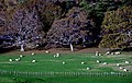 Quitley grazing. (8955076428).jpg