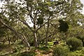 Réunion WalkingUnderTheTrees.JPG