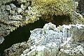 RIPangururanHotSprings5.jpg