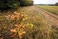 A l'automne