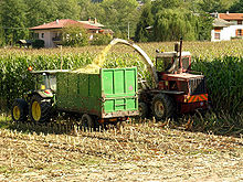 Raccolta e triturazione del mais per insilato
