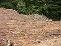 Rare pair of hares - geograph.org.uk - 868980.jpg