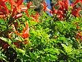 Red Flowers on a Bush.jpg