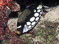 Reef4412 - Flickr - NOAA Photo Library.jpg