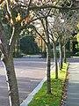 Regent's Park - geograph.org.uk - 1048143.jpg