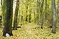 Rezerwat przyrody Morysin, park 11.jpg