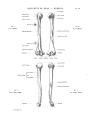 Richer - Anatomie artistique, 2 p. 26.png