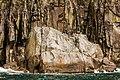 Rissa tridactyla, Bahía de la Resurección, Seward, Alaska, Estados Unidos, 2017-08-21, DD 27.jpg
