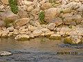 River Kosi.jpeg