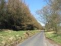 Road and larch plantation at White Rig - geograph.org.uk - 1231639.jpg