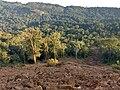 Roadside Landslip in Vazachal Forest, Anaimalai hills IMG 20180909 175134075 HDR.jpg