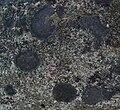 Rock based lichen Gorrie, Western Australia.jpg