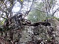 Rocks above the quarries in Leigh Woods - Nov 2013 - panoramio.jpg