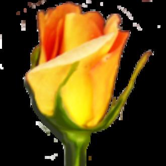 Rosegarden - Image: Rosegarden icon